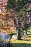 Städtischer Park im Herbst, Kanada Stockfoto