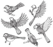 Ste of hand drawn ornate birds. Stock Photo