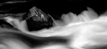 Steadfast In The Rapids stock images