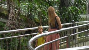 Steadicam参观一个热带鸟公园的射击了年轻女人和她的小儿子 股票视频