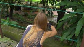 Steadicam参观鸟公园的射击了年轻女人和她的小儿子 妇女为孔雀照相 股票视频