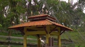 Steadicam射击了有瀑布和长的走道的一个鸟公园在热带 照相机显露开帐单的一个小组黄色 影视素材