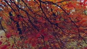 Steadicam: идти под ветви деревьев Переулок под деревьями видеоматериал