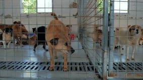 Steadicam карданного подвеса сняло грустных собак в укрытии за загородкой ждать быть спасенным и принятым к новому дому Приютите  акции видеоматериалы