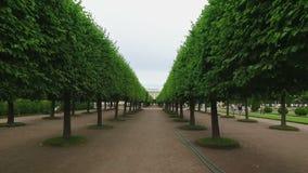 Steadicam сняло деревьев в парке сток-видео