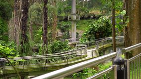 Steadicam ha sparato di un parco dell'uccello con una cascata ed i passaggi pedonali lunghi in tropici video d archivio