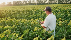 Steadicam shot: The farmer works in the field in the evening before sunset, enjoys a tablet. Side view