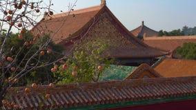 Steadicam sköt av en loppbloger för ung kvinna som besöker Forbiddenet City - forntida slott av Kina kejsare persimmon lager videofilmer
