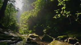Steadicam strzelał: Czysty halny strumień w tajemniczym ranku lesie promienie słońce robi ich sposobowi przez zdjęcie wideo