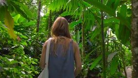 Steadicam strzelał młodej kobiety odprowadzenie w tropikalnym lesie zbiory wideo
