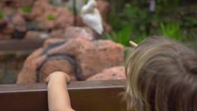 Steadicam tiró de una mujer joven y de su pequeño hijo que visitaban un parque del pájaro Mirada del muchacho en una garza blanca almacen de metraje de vídeo