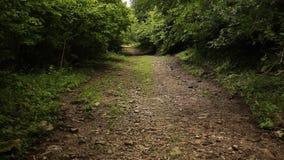 Steadicam tiró del camino forestal metrajes