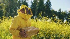 Steadicam tiró del hombre del apicultor con el marco de madera que caminaba en campo del flor mientras que trabajaba en colmenar almacen de metraje de vídeo