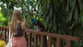 Steadicam van een jonge vrouw en haar weinig zoon wordt geschoten die een vogelpark bezoeken dat De vrouw neemt beelden van een p stock video