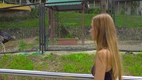 Steadicam van een jonge vrouw wordt geschoten die een vogelpark wisiting die struisvogels bekijken die stock videobeelden