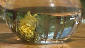 Flower Petals and Herbs on Bottom of Teapot. Steady, close up shot of flower petals and herbs on the bottom of a teapot and slowly floating to the top stock video footage