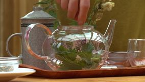 Person Putting Leaves and Sprigs in Kettle. Steady, interior, medium close up shot of a person putting an array of green leaves and sprigs into a glass kettle stock footage