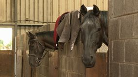 Two Horses In Stalls