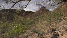 Red Rock Mountains and Rough Terrain. Steady, medium wide shot of red rock mountains and terrain full of brush and cacti stock video footage