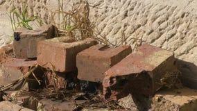 Plants beneath rocks. A steady shot of rocks and plants growing beneath the rocks stock video