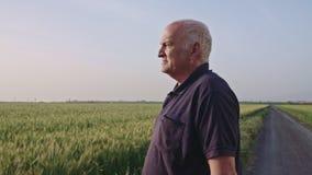 Steadycam που βλασταίνεται ενός παλαιού αγρότη που περπατά σε έναν πράσινο τομέα σίτου απόθεμα βίντεο