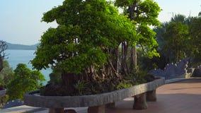 Steadycam disparou de uma árvore grande dos bonsais para dentro do em um templo Ho Quoc Pagoda do budhist na ilha de Phu Quoc, Vi vídeos de arquivo