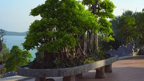 Steadycam shot of a big bonsai tree inside of a a budhist temple Ho Quoc Pagoda on Phu Quoc island, Vietnam
