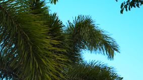 Steadycam shot of palms in a tropical park.  stock video