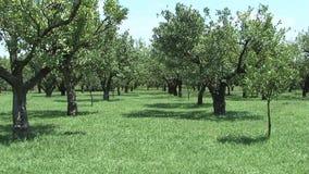 Steadycam: walk in the fields stock video