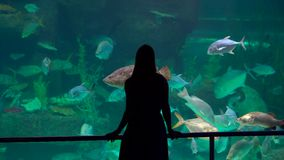 Steadycm shot. Silhouette of a woman watching incide of a huge aquarium full of exotic fish in an oceanarium.  stock video footage