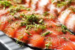 Steak fish salmon crude sprinkled with dill Stock Image