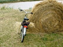 Stealing some hay! Royalty Free Stock Photography