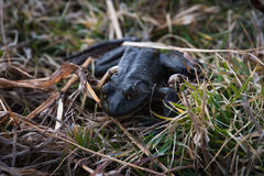 Stealth Frog Stock Photos