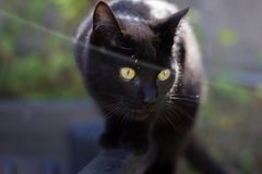 Stealthy cat. Walks carefully by treads Royalty Free Stock Image