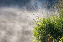 Steam above the water. Steam rising above the grassy riverbank in the morning Royalty Free Stock Images