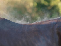 Horse Abstract Stock Photography