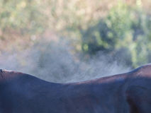 Horse Abstract Stock Photo
