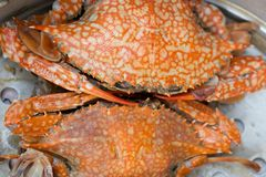 Steam crab Royalty Free Stock Photos