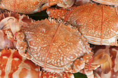Steam crabs in seafood market. Royalty Free Stock Image
