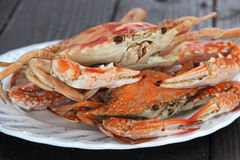 Steam Dungeness crab Stock Photos