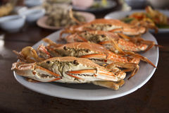 Steam Dungeness crab Stock Photography