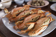 Steam Dungeness crab Royalty Free Stock Image