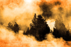 Steam Flowing Through Trees in Wilderness Royalty Free Stock Image