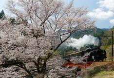 A steam locomotive travels on a bridge by a flourishing cherry blossom Sakura tree. Near Kawane Sasamado Station of Oigawa Railway in Shimada, Shizuoka, Japan royalty free stock photos