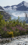 Steam at Portage Upright. A mountain stream flows into Portage Glacier lake with the glacier in the background Royalty Free Stock Photos