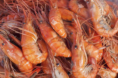 Steam prawns in seafood market. Royalty Free Stock Photography