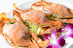 Steam red horse crabs. On a plate Stock Photos
