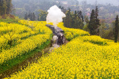 Steam retro train passing Yellow rapeseed flower field Royalty Free Stock Photos