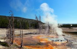 Minute Geyser in Norris Geyser Basin, Yellowstone National Park, Wyoming. Steam rising from a colorful hot spring surrounding minute geyser at Norris Geyser Stock Images