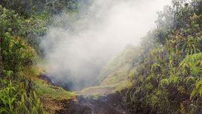 Steam Rising From Vent in Jungle at Hawaii Volcanoes National Pa Stock Photography
